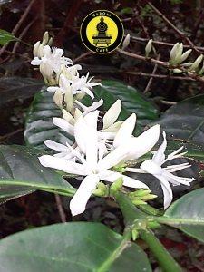 El café de origen es de mayor calidad y deberías elegirlo por sus destacados sabores y aromas. además de apoyar directamente al productor.