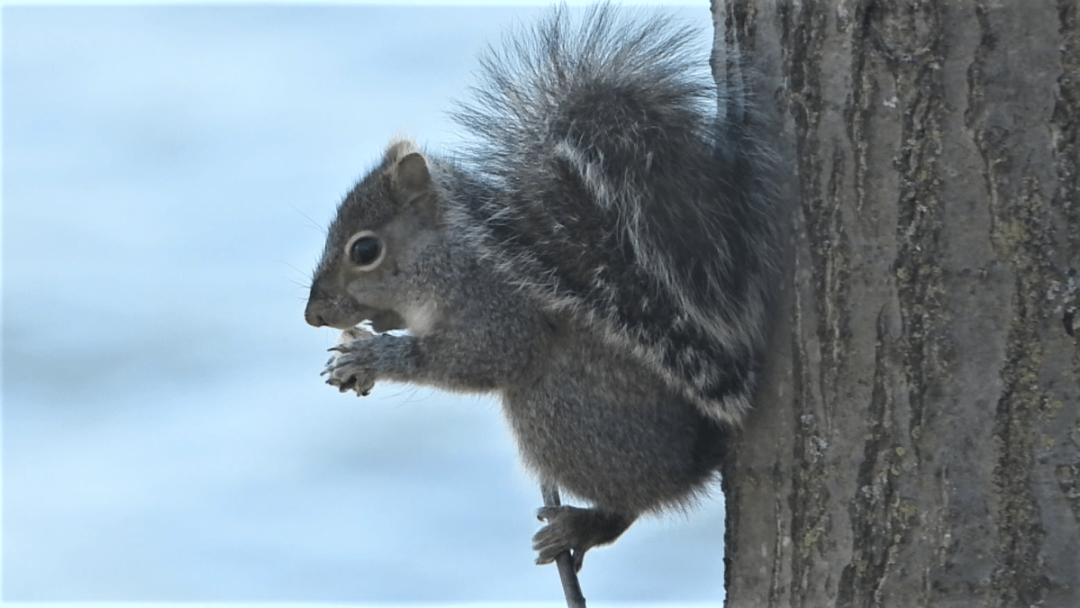 When a Squirrel Needs a Snack