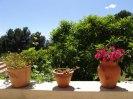 pot_plants