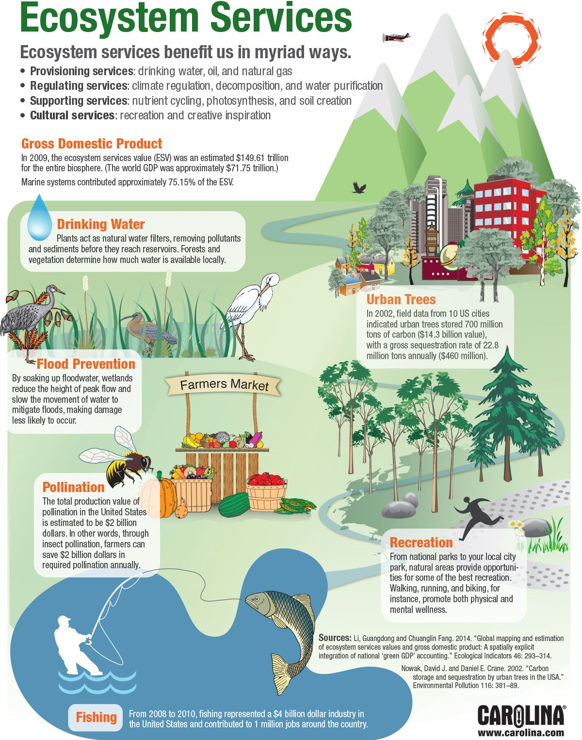 Infographic Ecosystem Services