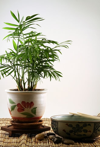 Plants that improve your indoor air quality  Greenville SC Indoor Air Quality