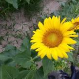 Images courtesy of Emily Odom of Odom Farming Company Inc.