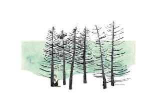 Soledad boreal