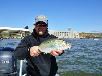 A big American shad is the kind of target that plenty of South Carolina anglers pursue in the Cooper River every February and March.