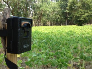 Get your trail cameras up and running this month to get an early idea of what your deer herd looks like.