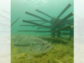 fish habitat