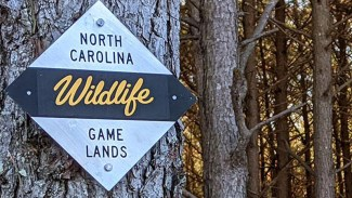 Sunday hunting on NC public game lands?