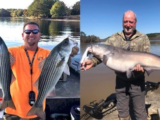 Lake Wateree catfish and stripers