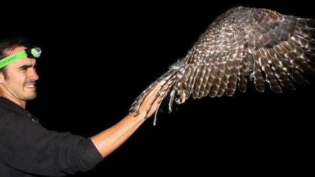 1460992254851 Author's Blog Owls