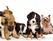 Les chiens et le scrabble