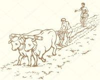 Quelques termes sur l'agriculture et le jardinage, fin 5/5