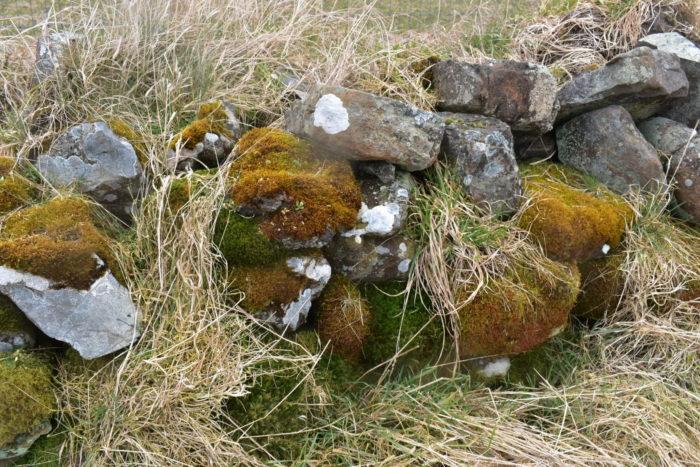 Old Scottish Dykes