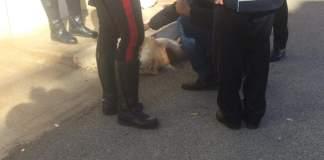 Il Cane Remì e i Carabinieri