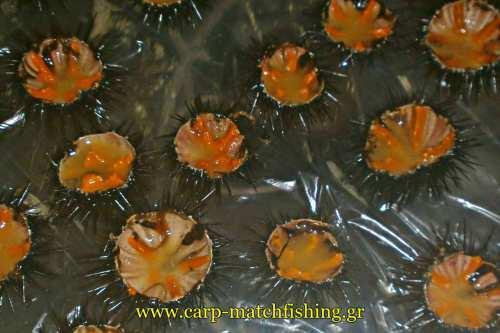 prostima-gia-psarema-axinon-kath-carpmatchfishing