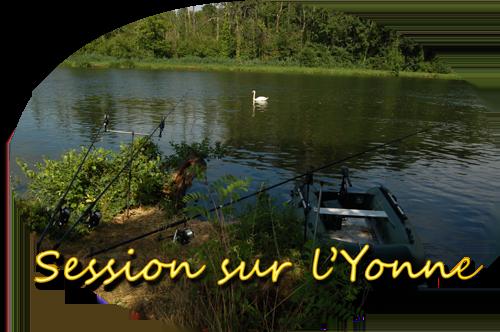 Cygne sur l'Yonne.