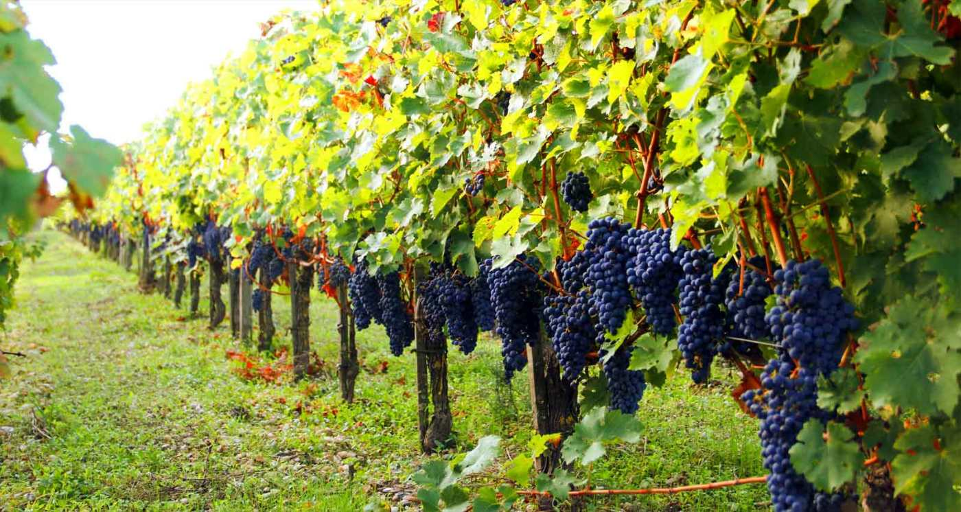 Vinícolas em Bordeaux, na França: as melhores pra visitar - Carpe ...