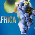 L'universo vino: l'Africa