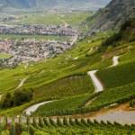 La viticoltura del Vallese: varietà di suoli.