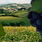 Alla scoperta dei vitigni: il Sagrantino.