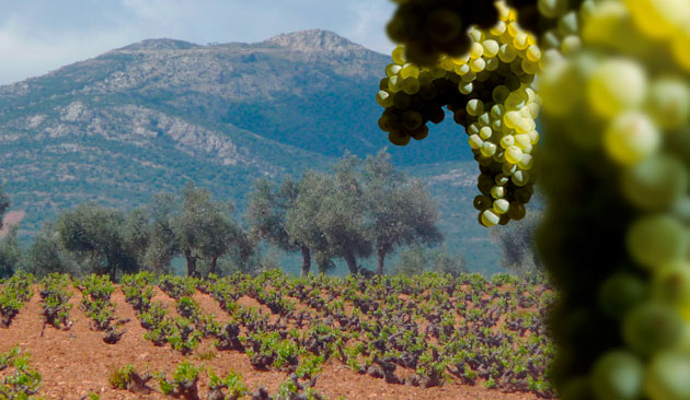 vitigno Airèn