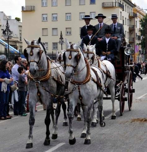 Spanish horses