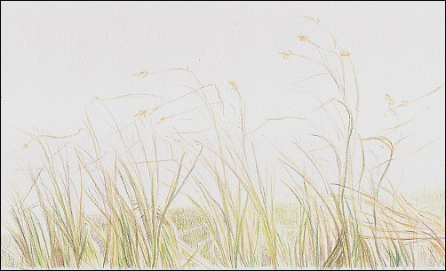 Drawing Autumn Grass in Colored Pencil - Step 3