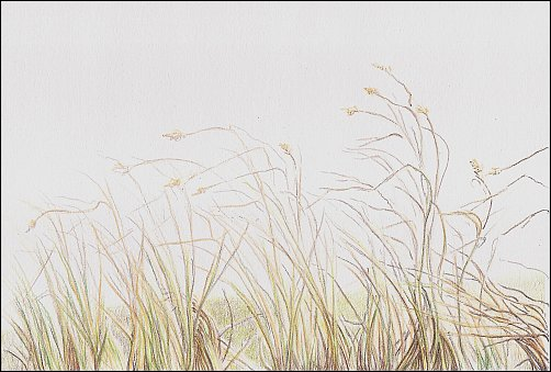Drawing Autumn Grass in Colored Pencil - Step 4