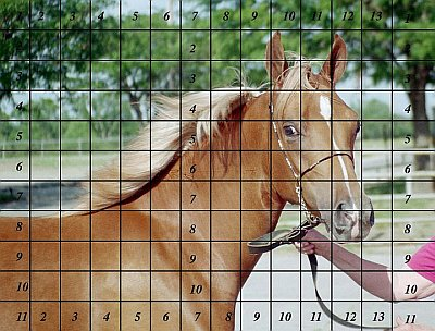 Direct Drawing Tutorial - Palomino Horse - Reference Photo with Grid