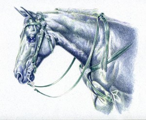 Morgan in Western Indigo Blue Under Drawing