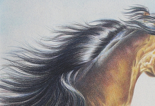 Tips for Drawing Hair in Colored Pencil 4