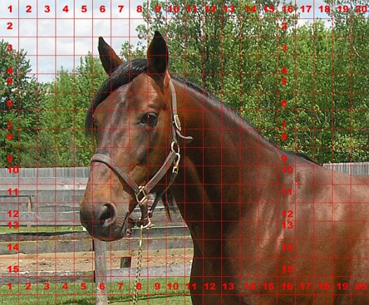 How to Draw a Horse Using a Grid, Step 1