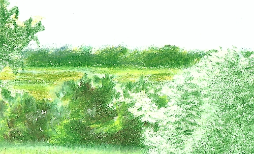 Drawing Distance - Drawing of Trees in the Distance