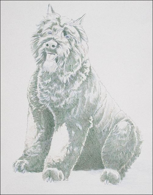 How to Draw a Dog in Colored Pencil Part 2 - Dark Green Layer
