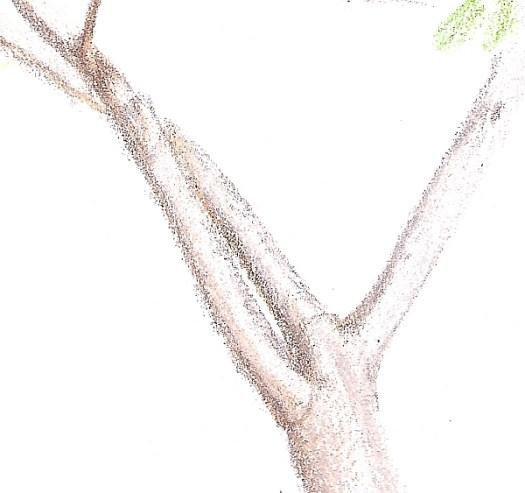 Colored Pencil Plein Air Drawing Week 1 Detail 1