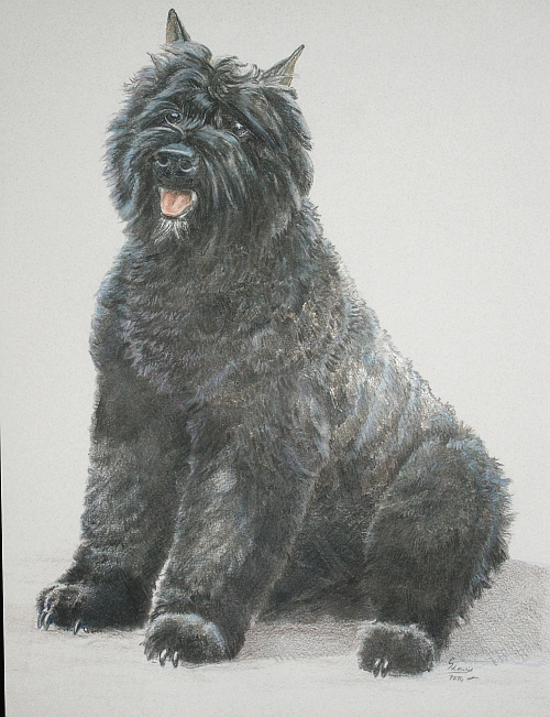 How To Draw A Dog With Colored Pencil Part 5 Carrie L Lewis Artist
