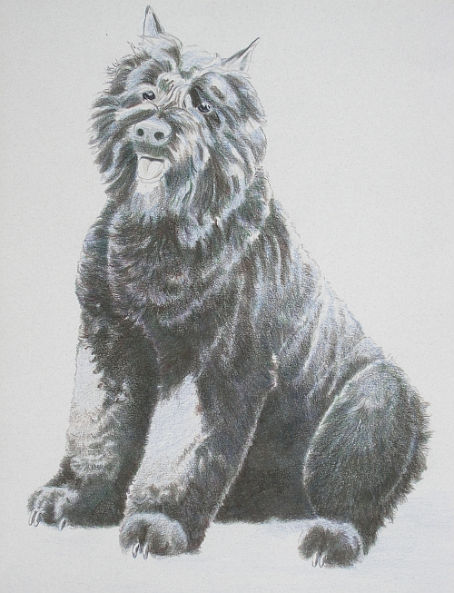 How to Draw a Dog in Colored Pencils Part 4 - Mixed Layer 2