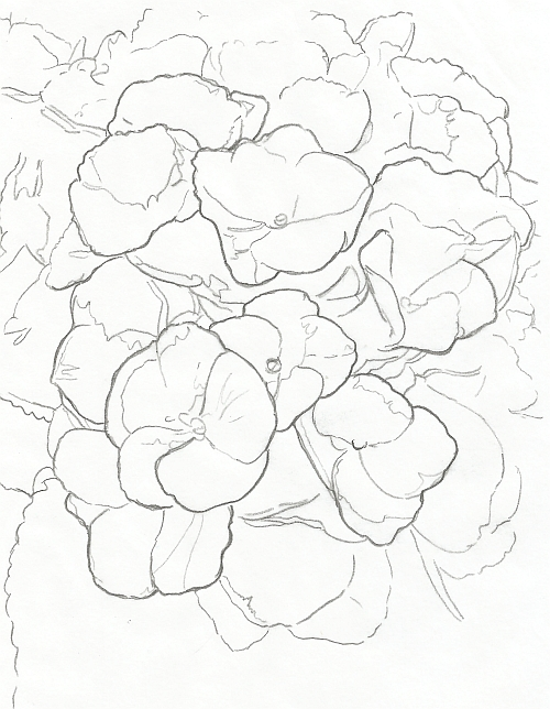 How to Draw Complex Flowers - Line Drawing