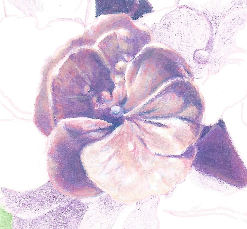 How to Draw Complex Flowers - Step 9