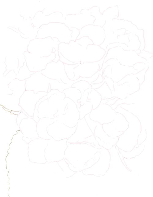 How to Draw Complex Flowers - Transferred Line Drawing