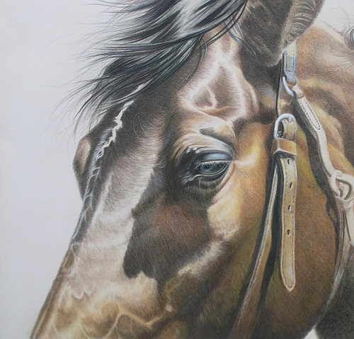 How to Finish a Colored Pencil Drawing - Adding Details