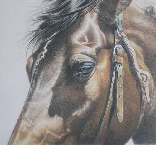 How to Finish a Colored Pencil Drawing - Final Adjustments
