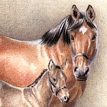 Drawing Mini Clinics - How to Draw a Miniature Horse Drawing