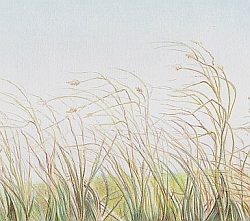 Drawing Natural Looking Landscapes - How to Draw Autumn Grass
