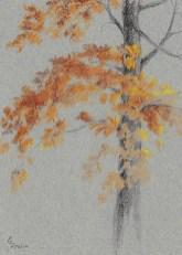 2017 Plein Air Drawings - 2017-11-10 Autumn