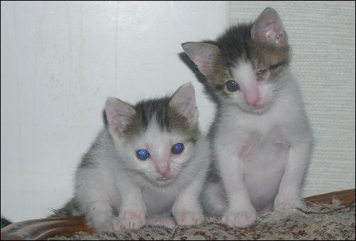 How the Kittens are Doing - Kittens 2 & 5