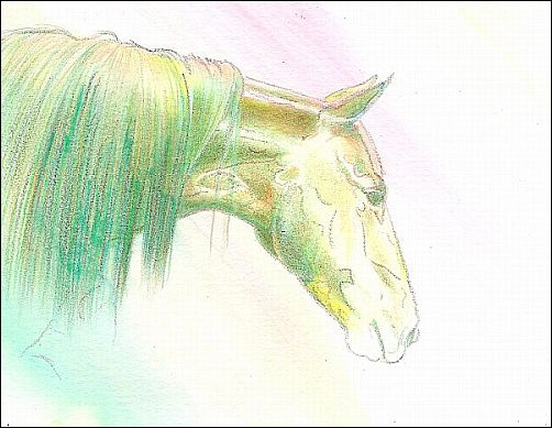 How to Finish a Drawing Started with Water Soluble Colored Pencils - Step 1
