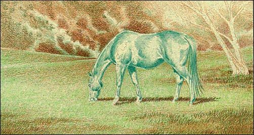 Draw a Horse Using the Complementary Under Drawing Method - Step 3