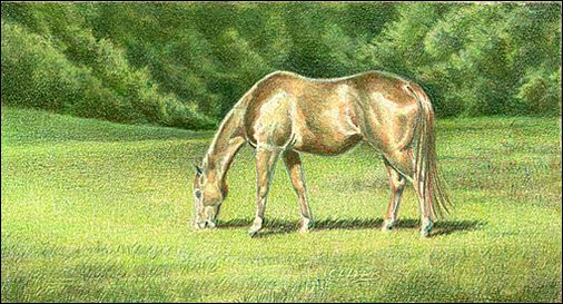 Draw a Horse Using the Complementary Under Drawing Method - Step 6