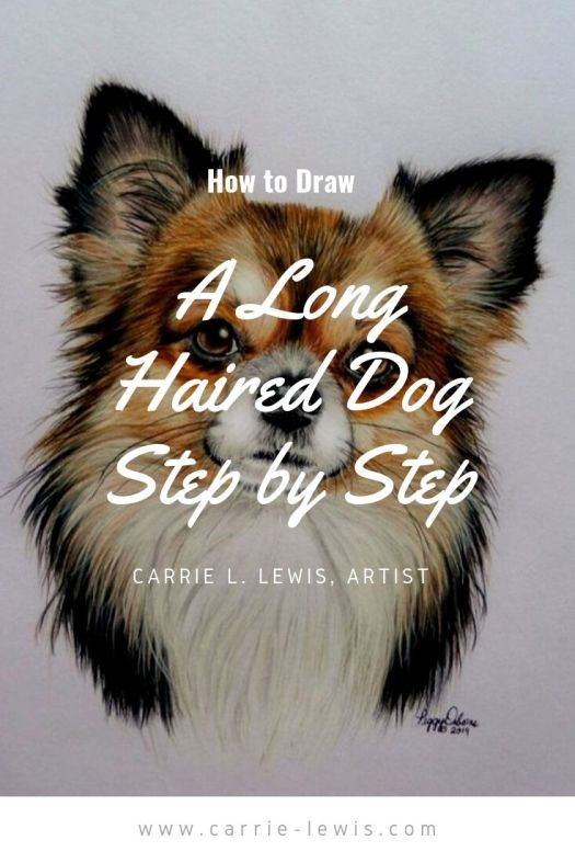How to Draw a Long Haired Dog Step by Step