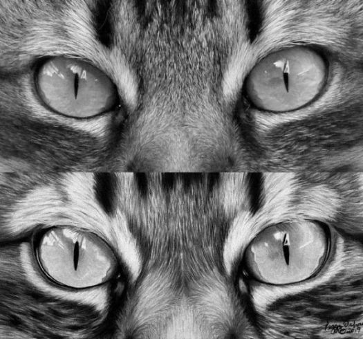 How to Draw Cat Eyes - Black and white Side-by-Side Comparison
